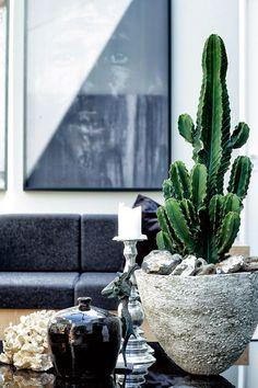 Cacti are always a good idea!