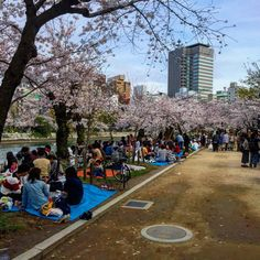 I have to admit that the main reason to visit Japan was the Cherry Blossom season, or Hanami. It was nice to see all these colorful trees and the missive amount of people gathered under them having picnics all over the country. Some areas were more interesting to see than...