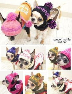 skipdog   Rakuten Global Market: With a Pom Pom scarf knit caps (clothing fake dog clothes Chihuahua small dog knit CAP)