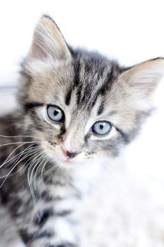 Bratte bakka og grøne lier: Kattematmors bekymring