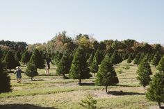 #Christmas tree farms are the best