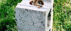 I Had a Pet Red Squirrel Once Red Squirrel, Wildlife, Pets, Outdoor Decor, Animals, Animales, American Red Squirrel, Animaux, Animal