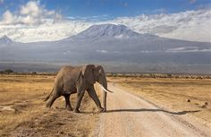 Big Wild Elephant Crossing Road in Jungle Animal HD Photos