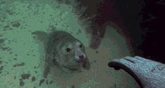 """Why I love diving - """"Welcome To My World, Human"""""""