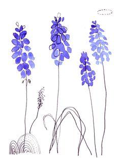 Muscaris, #illustration de Cécile Hudrisier