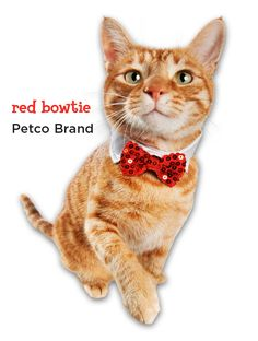 Kitty will be dressed to impress with this snazzy sequined cat bow tie.
