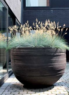Cool season grass, Blue Fescue, is lovely in planters. This one just happens to be in an enormous, over-sized planter, and the grass still manages to show off. Outdoor Planters, Garden Planters, Outdoor Gardens, Planter Pots, Large Garden Pots, Potted Garden, Bamboo Garden, Container Plants, Container Gardening