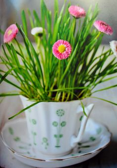 Spring in a tea cup using wheat grass and foraged daisies. From the book 'The Crafted Garden' by Louis Curley