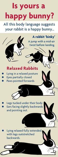 ♥ Pet Rabbit Ideas ♥ My rabbit relaxes alot