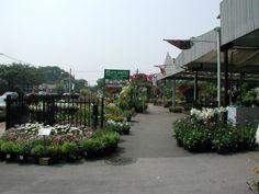 Atlantic Nursery & Garden Shop   250 Atlantic Ave.,   Freeport, NY 11520  Tel. (516) 378 7357