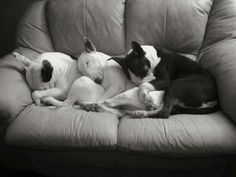 #Bully cushions