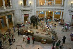 Uno de los mejores museos de ciencias del mundo está en Nueva York(EEUU)