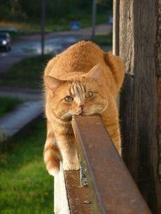 Kitty Moment.