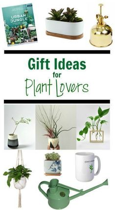 Gift Ideas for Plant Lovers - Clever Bloom #houseplants #giftideas #indoorplants