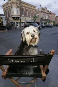 Gilmore Girls - Paul Anka the Dog! Stars Hollow, Lauren Graham, Disney Channel, Team Logan, Gilmore Girls Quotes, Gilmore Girls Funny, Girlmore Girls, Lorelai Gilmore, Movies And Series