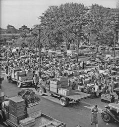 grönsaksförsäljning på Klaratorget 1951