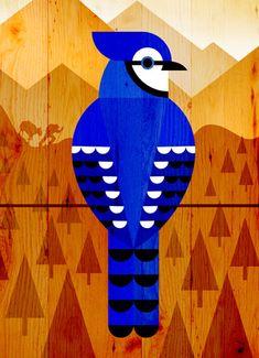 Scott Partridge - illustration - pileated woodpecker   My ...