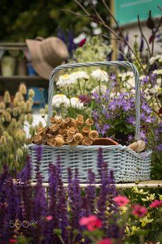 Hampton Court Palace flower show, England Hampton Court Flower Show, Flowers, Palace, Britain, Home Decor, England, Decoration Home, Room Decor, Palaces