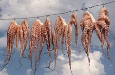 Hanging Octopuses Mastichari (Kos, Greece)