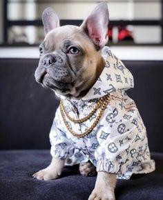 Dettagli su Puppy Waterproof Jacket Raincoat Fashion Dog Clothes for Dogs - Regenschirm und Regenmantel Cute Dog Clothes, Small Dog Clothes, Pet Boutique, Dog Jacket, Rain Jacket, Animal Fashion, Dog Fashion, Dog Coats, Dog Harness