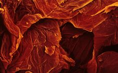 Beautiful sundried tomato magnified 250x. World Under a Microscope