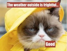 Grumpy Cat - ''Today's Forecast - Grumpy with a chance of throat punches.'' (The Official Grumpy Cat) Grumpy Cat Quotes, Funny Grumpy Cat Memes, Funny Animal Jokes, Cute Funny Animals, Funny Cute, Cute Cats, Funny Memes, Grumpy Cats, Hilarious
