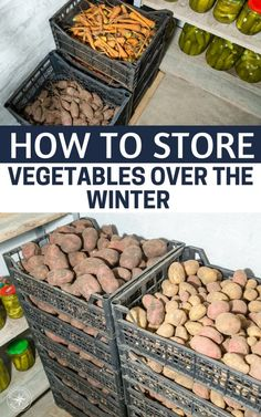 How to Store Vegetables Over the Winter: Modern and Vintage Storage Tips - If you grow your own vegetables storing the stuff you don't eat or sell is important not only for a survival perspective but it's a great way to save money and have homegrown veget Home Grown Vegetables, Store Vegetables, Growing Vegetables, Veggies, Perennial Vegetables, Winter Vegetables, Vegetable Storage, Vintage Storage, Homestead Survival