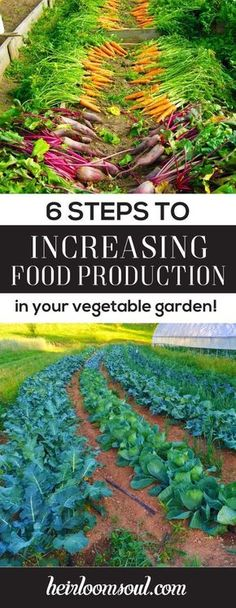 How to Increase Food Production in Your Vegetable Garden in 6 Steps | Heirloom Soul | heirloomsoul.com #vegetablesgardening