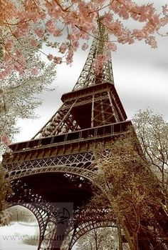 I don't have any desire to go to France, but this shot is SO PRETTY! Love the Eiffel Tower!