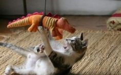 Really Funny Pics of Animals