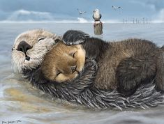 sea otter mums have tender hearts by Psithyrus on deviantART