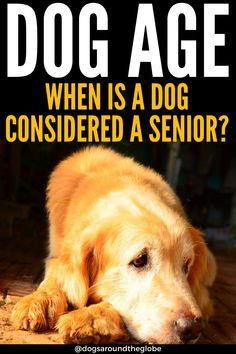 When is a dog considered a senior? How do you care for senior dogs? Here are a few simple tips to give your dog the happiest of golden years!