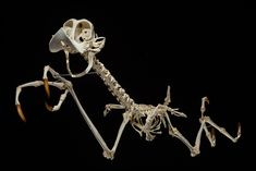 Roadrunner - This Is What The Skeletons Of Famous Cartoon Characters Would Look Like | IFLScience