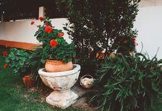 Pues un jardín y ya estaría no pero en serio me encantan los verdes en las fotos.  55/365 y todavía me quedan más de 300 ofú jaj     Tags.  #followme #photooftheday #picoftheday  #photo #photos #portrait #pics  #photographer #pictures #ptk_sky #instagood #photoshoot #agameoftones #vsco #vscocam #vscofilms #TagsForLikes #Valladolid #canon #canonphotos #like4like #fashion #amazing #love #instagood #nofilter #lol #instamood #cute #exposure