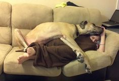 Great danes = excellent blankets