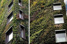 Patrick Blanc inspired hydroponic green wall