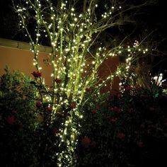 Techmar Plug and Play - Linea 100 Warm White LED String Lights from Lyco. Led String Lights, Light String, Lighting System, Water Garden, One Light, Led Lamp, Plugs, Bulb, Warm