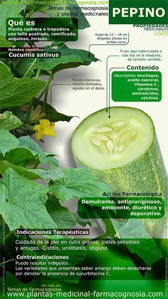 Que es el pepino y cómo puede beneficiar tu salud. #infografia #pepino
