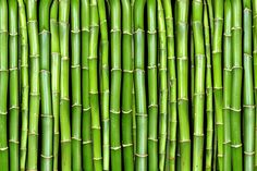 Wallpaper with the world's fastest growing plant, bamboo. Vertical or horizontal bamboo - you choose. Patterns In Nature, Textures Patterns, Bamboo Wallpaper, Plant Texture, Tiki Lounge, Fast Growing Plants, Vertical Or Horizontal, Live Plants, Decoration