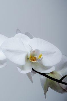 Eve & Fall | Studio Botanicals. Photo: Kelly Stock.