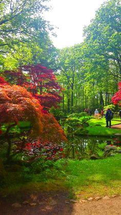 Japanese garden, the hague, netherlands