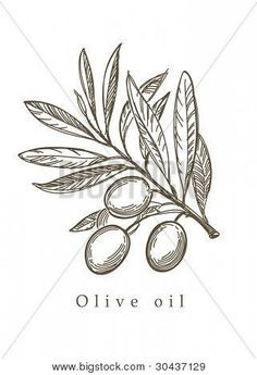 Olive drawing