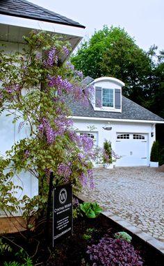 Wisteria-at-Hoop-Top-House-cynthiaweber.com_