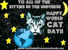 Happy World Cat Day 2014