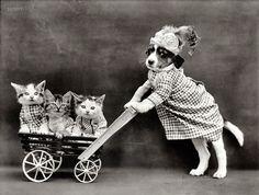 1915, el primer viral de gatos de la historia
