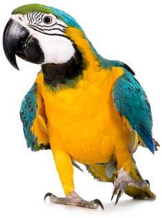 #juguetes #pajaros #aves #loros #mascotas #animales #naturaleza #avestropicales  Tienda para mascotas aquí: www.theanimallshop.com