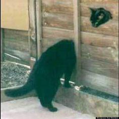 cat illusion