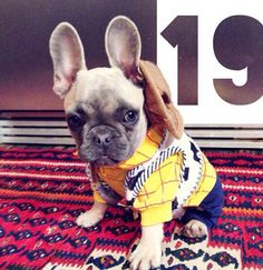 You've got a man's best friend in me | 19 Dogs Dressed As Movie Stars For Halloween