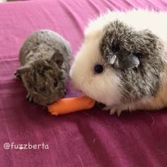 Nothing is stronger than the love between a mother and her jelly baby... Except for carrots. - Our adorable fuzz calendars make the perfect stocking stuffers! (Link in bio)