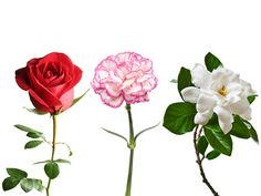 Your bouquet might be sending a romantic message, but is it the right one? #valentine #flowers